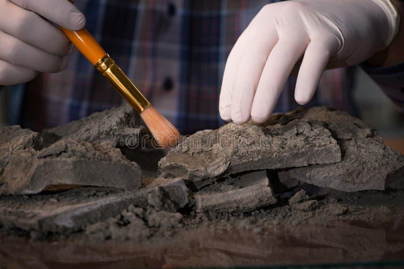 Travailler d'archéologue de fin de nuit dans le bureau photos stock