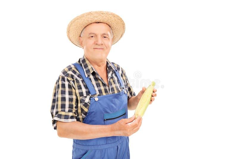 Travailleur agricole mûr tenant un épi de maïs photo stock