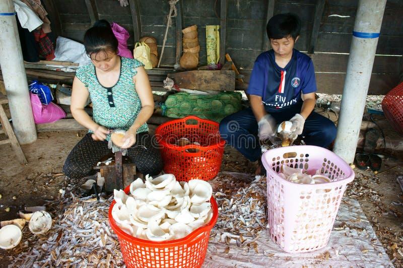 Travailleur asiatique, noix de coco, coprah, matériel, delta du Mékong photo libre de droits