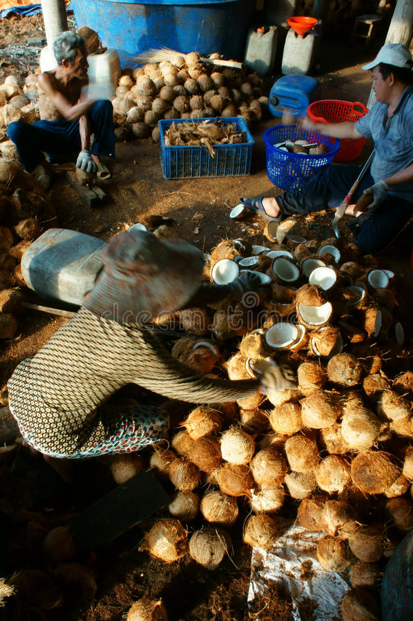 Travailleur asiatique, noix de coco, coprah, matériel, delta du Mékong photographie stock