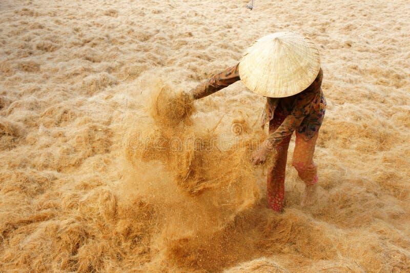 Travailleur asiatique, noix de coco, Vietnamien, fibre de coco, delta du Mékong photographie stock