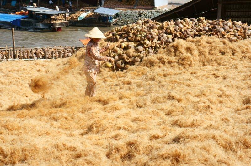 Travailleur asiatique, noix de coco, Vietnamien, fibre de coco, delta du Mékong photographie stock libre de droits