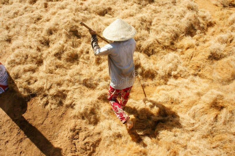 Travailleur asiatique, noix de coco, Vietnamien, fibre de coco, delta du Mékong image stock