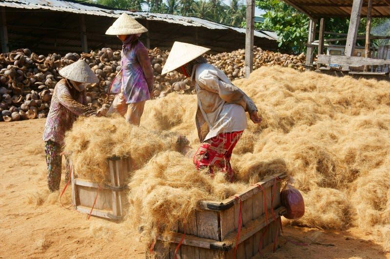 Travailleur asiatique, noix de coco, Vietnamien, fibre de coco, delta du Mékong photo stock