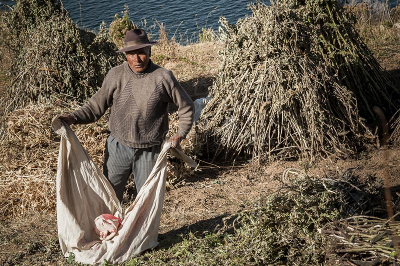 Travailleur bolivien non identifié sur Isla del Sol, sur le lac Titicaca, le plus grand lac à haute altitude dans le monde 3808 m image stock