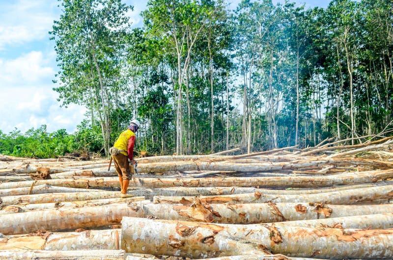Travailleur coupant les arbres image libre de droits