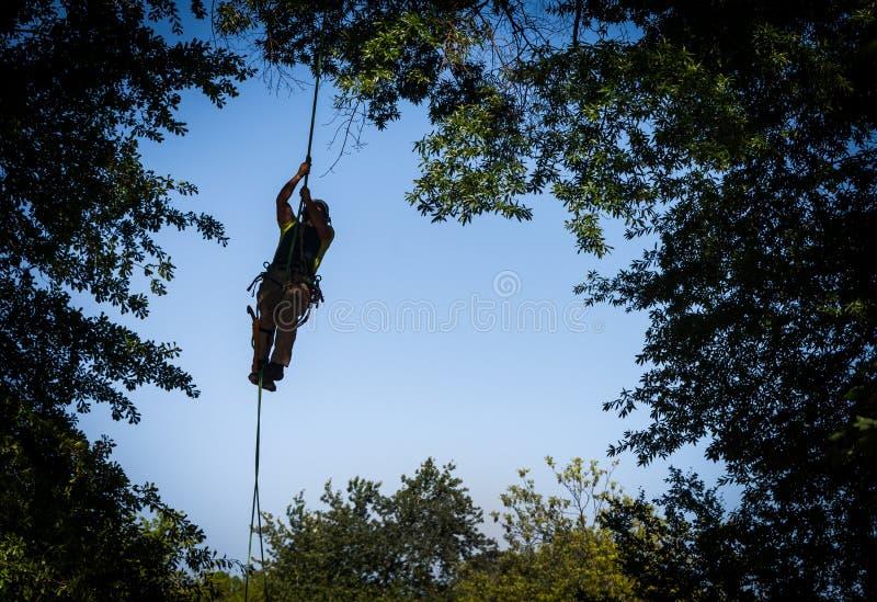 Travailleur d'arbre s'élevant pour couper des branches image libre de droits