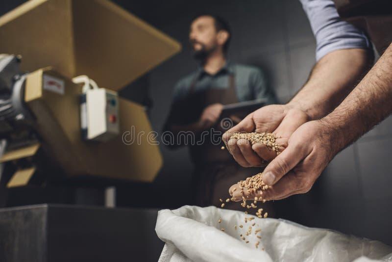 Travailleur de brasserie inspectant des grains photo libre de droits