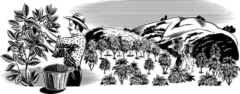 Travailleur de café sur une plantation illustration de vecteur