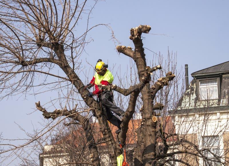 Travailleur de forêt cultivant un arbre image libre de droits