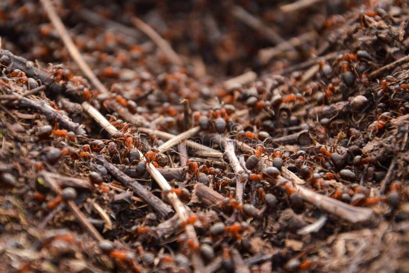Travailleurs acharnés de fourmis au travail photographie stock libre de droits