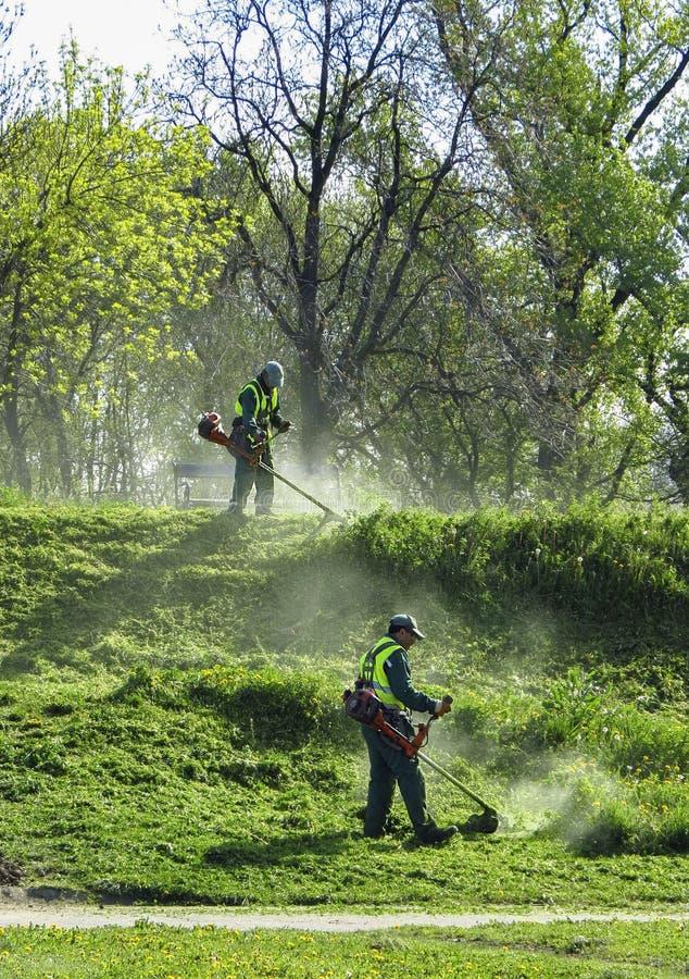 Travailleurs de tondeuse à gazon coupant l'herbe dans le domaine vert photo stock