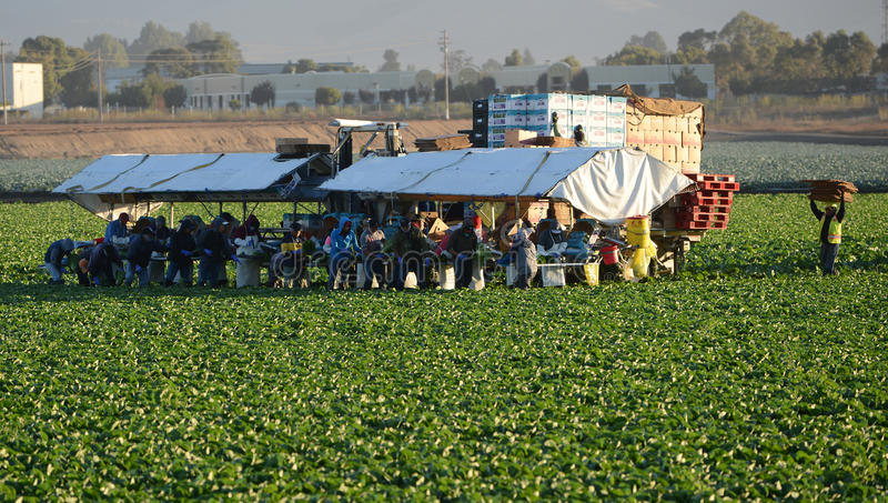 Travailleurs migrants images stock