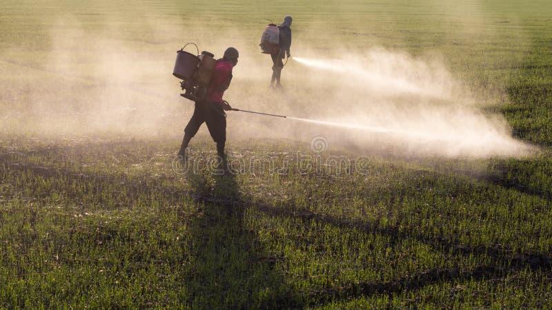 Travailleurs pulvérisant des herbicides photos stock
