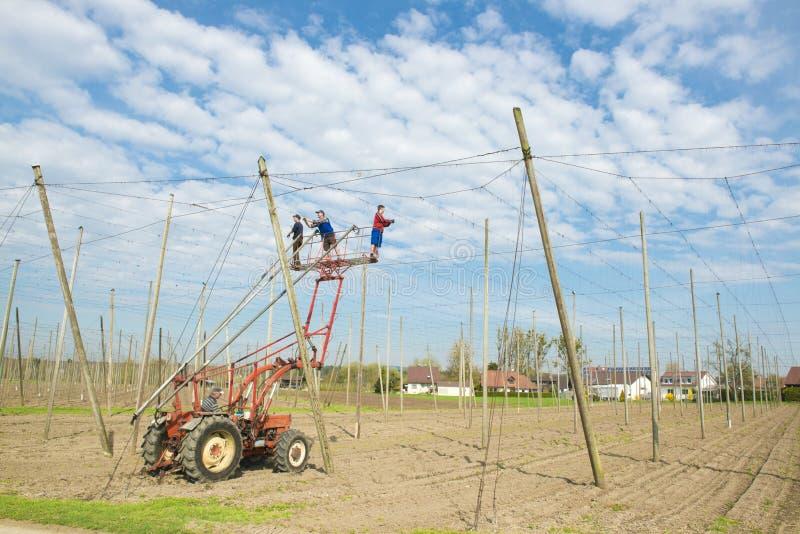 Travailleurs sur la pelle d'un tracteur de ferme image libre de droits