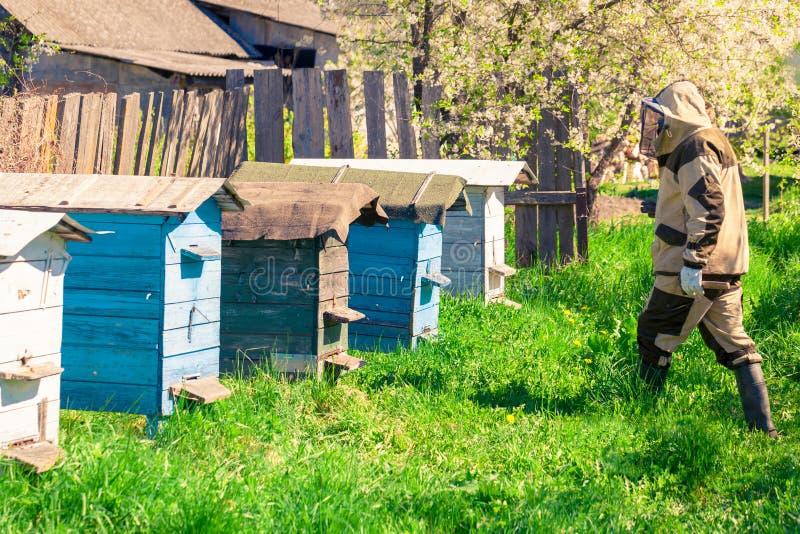 Travaux d'apiculteur dans le rucher près des ruches images stock