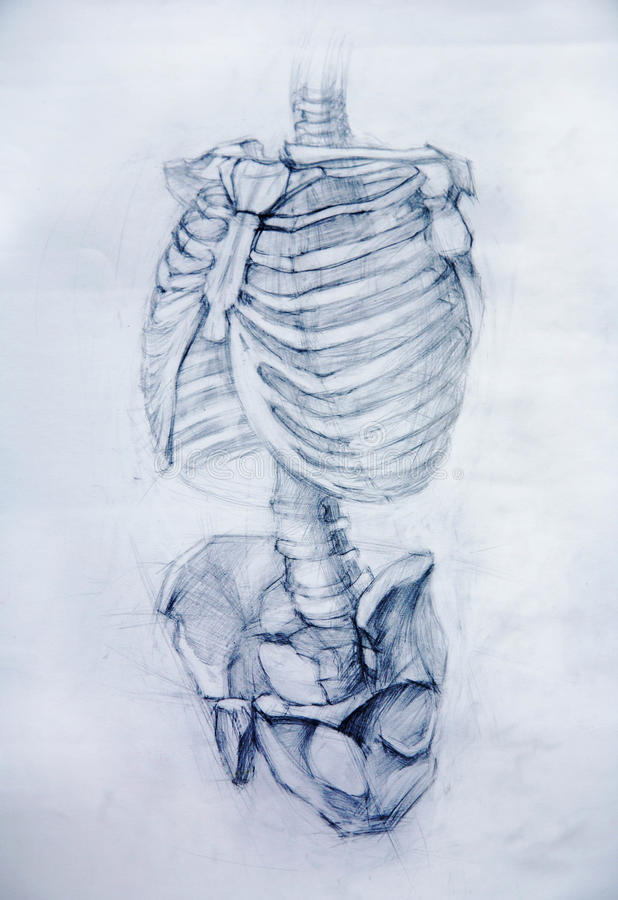 Travaux de studio d'Anatomy.Drawing illustration de vecteur