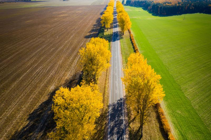Travel background. Fall landscape. Aerial drone view. Empty road to horizon with autumn yellow trees stock photography