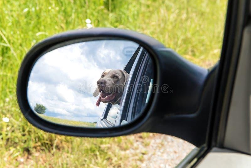 Doggy style reflection