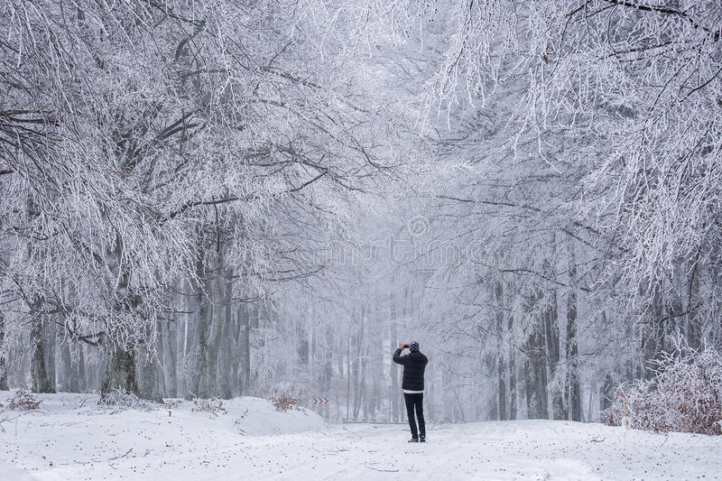 Travel concept - tourist takes picture of snow-bound oak in fore stock image