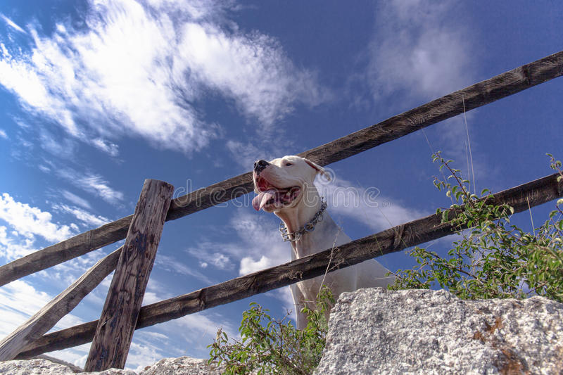 Travel with dogs stock image