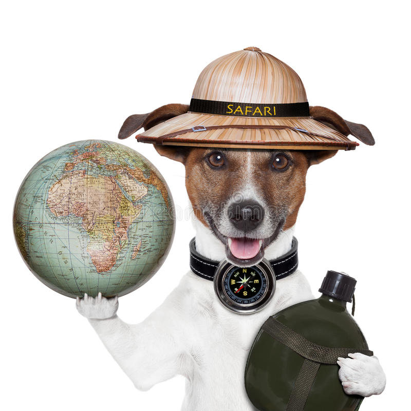 Travel globe compass dog safari royalty free stock images