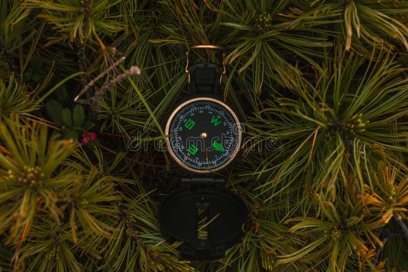 Travel, hiking, orienteering and navigation concept - black magnetic compass lies in pine branches, close-up royalty free stock photos