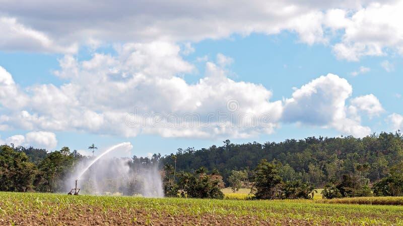 Travel Irrigation Watering Sugar Cane Crop stock image