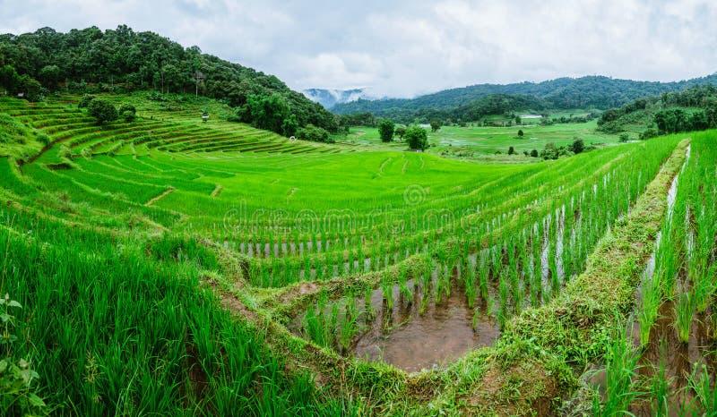 Travel Rainy Season landscape of rice field at  Phamon Bamboo Pink House Chiangmai Thailand. Travel Rainy Season landscape of rice field at Phamon Bamboo Pink royalty free stock photo