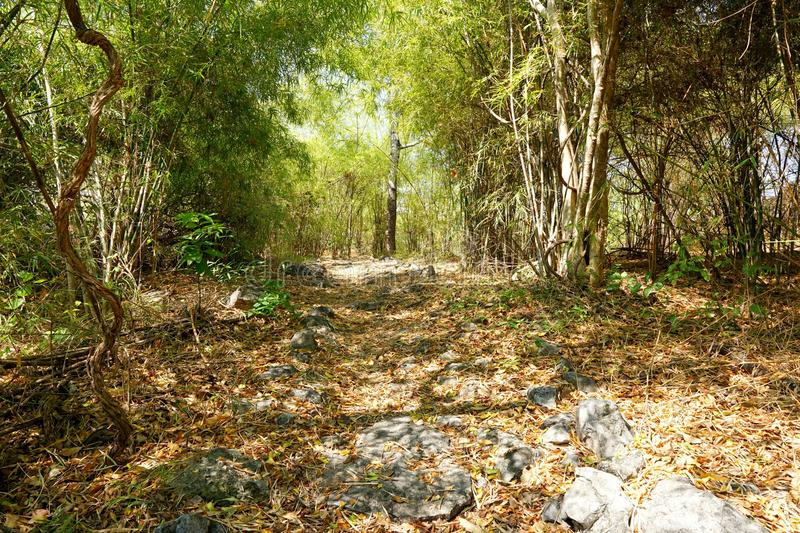 Travel Thailand - road in the woods in Khao Nang Panthurat Forest Park at Cha am. stock photos