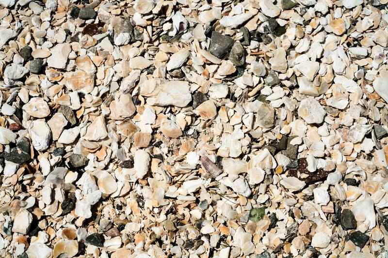 Surface from mollusks shells of beach in Cancale. Travel to France - surface from mollusks shells of urban beach in port La Houle in Cancale town in Brittany in stock photos