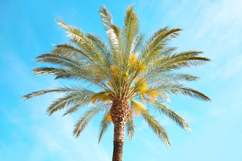 Travel, tourism, vacation, nature summer holidays concept -. Travel, tourism, vacation, nature and summer holidays concept - palm tree on blue sky background stock image