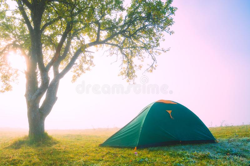 Travel tourists tent under the big tree on a meadow stock image