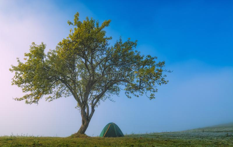 Travel tourists tent under the big tree royalty free stock images