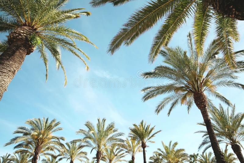 Travel, vacation, nature and summer holidays concept - palm trees over blue sky background royalty free stock photos