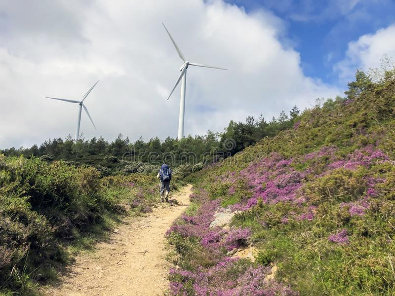 Traveler with backpack and trekking sticks, hiking poles climbs up a ground road up to hill with wind generators are. Traveler with a backpack and trekking royalty free stock photo