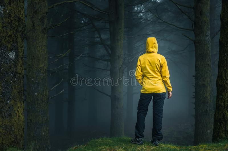 Traveler looking to a forest royalty free stock image
