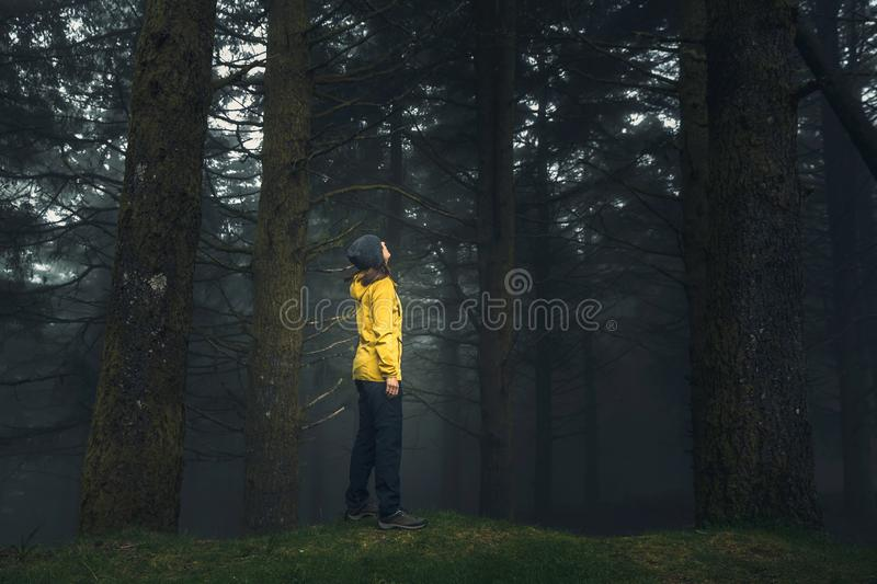 Traveler looking to a forest stock image