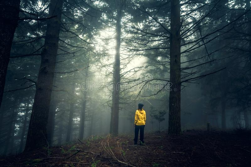 Traveler looking to a forest stock photos