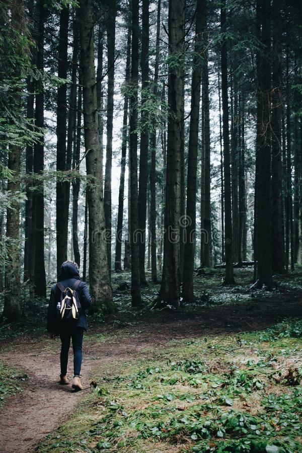 Traveler and spring forest in mountains stock photography