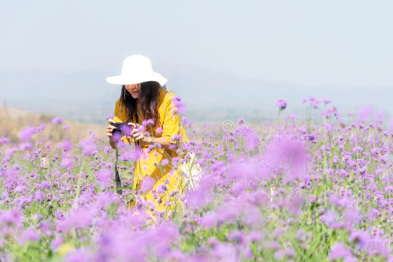 Traveler or tourism Asian women standing and holding camera take a photo flower in the purple  verbena field in vacations time. Traveler or tourism Asian woman royalty free stock photos