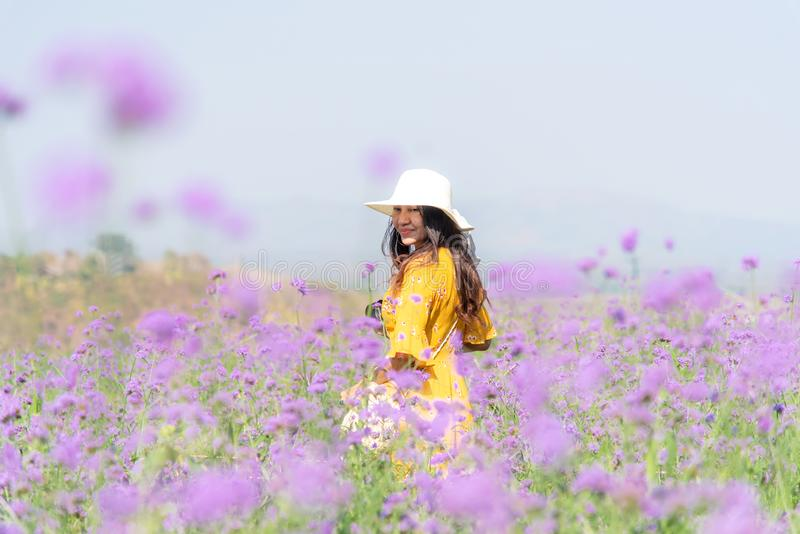 Traveler or tourism Asian women standing and chill  in the purple  verbena flower field in vacations time.  People  freedom and re. Traveler or tourism Asian royalty free stock photography