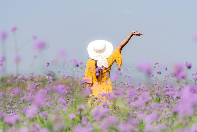 Traveler or tourism Asian women standing and chill  in the purple  verbena flower field in vacations time.  People  freedom and re. Traveler or tourism Asian royalty free stock image