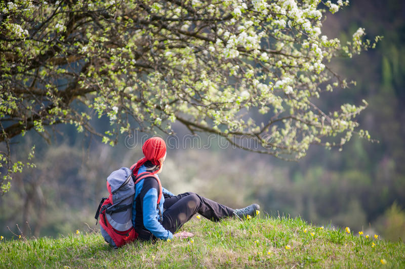 Traveler woman with a backpack near blooming tree. Woman with a backpack sitting on top of hill with yellow wildflowers near lonely blooming tree with forest royalty free stock photography