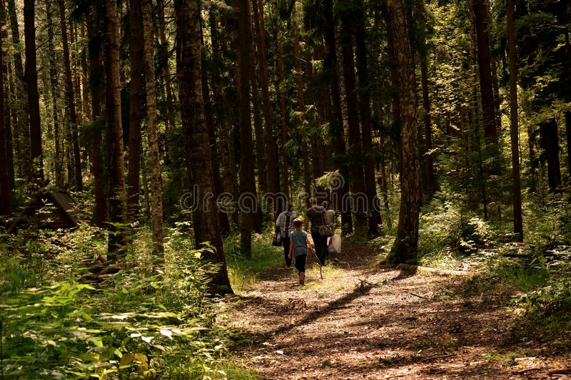 Travelers go in the green forest on footpath on summer stock photos