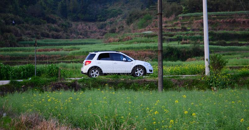 The traveling car travels in the fields in spring. Green seedlings are growing and yellow rapeseed flowers are blooming. Beautiful pastoral scenery royalty free stock photo