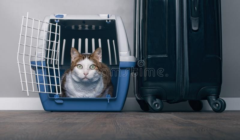 Traveling with a cat - Tabby cat looking anxiously from a pet carrier next to a suitcase. royalty free stock photos