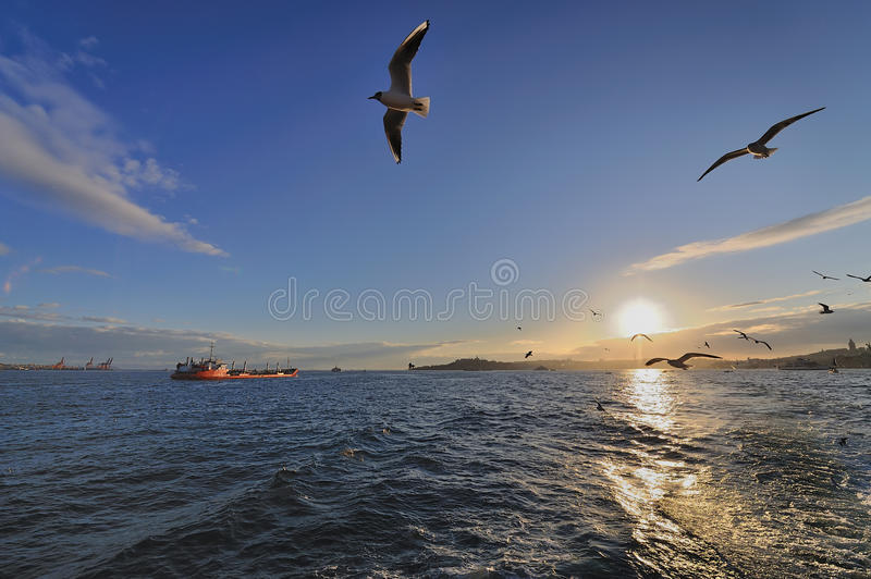Traveling with Gulls royalty free stock image