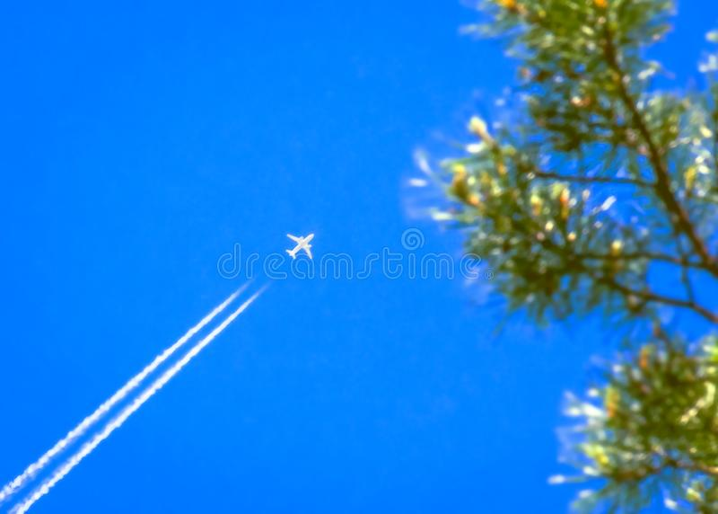 Traveling, Vacation, Transportation Concept: a Jet Airplane with White Contrail in Blue Sky Over the Pine Tree Top Branches stock image