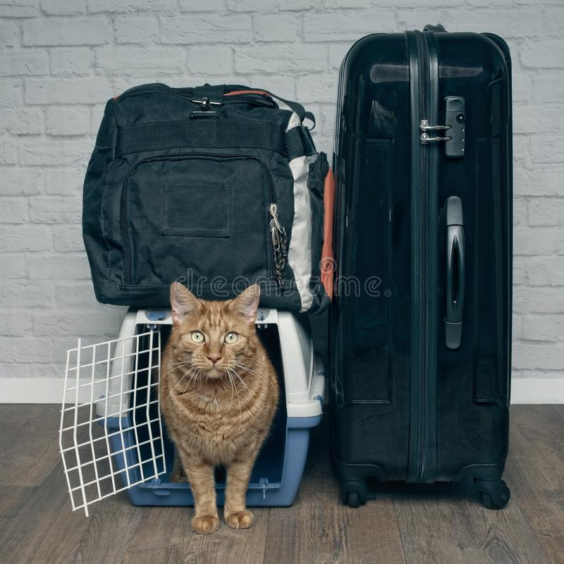 Free Traveling With A Cat - Ginger Cat Looking Anxiously From A Pet Carrier Next To A Suitcase. Royalty Free Stock Photos - 122430238